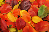 Autumn Background Photographic Print by  Malija