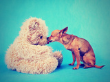 A Tiny Chihuahua Kissing a Teddy Bear Photographic Print by  graphicphoto