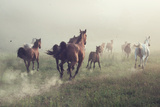Horses in Dust Photo by  conrado
