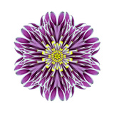Kaleidoscopic Chrystanthemum Flower Mandala Prints by  tr3gi