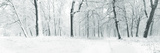 Panorama of Winter Forest with Trees Covered Snow Prints by  Olegkalina
