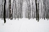Beautiful Winter Forest and the Road Fotodruck von Vitaliy Pakhnyushchyy