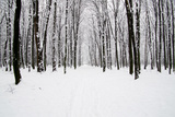 Beautiful Winter Forest and the Road Photographic Print by Vitaliy Pakhnyushchyy