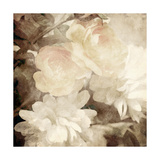 Art Floral Vintage Sepia Blurred Background with White Asters and Roses Posters by Irina QQQ