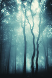 Mysterious Trees in a Forest with Fog Photographic Print by  ando6