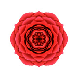 Red Rose Mandala Flower Kaleidoscopic Posters by  tr3gi