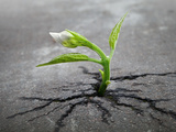 Little Flower Sprout Grows Through Urban Asphalt Ground Photographic Print by Eugene Sergeev