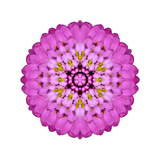 Pink Kaleidoscopic Flower Mandala Prints by  tr3gi
