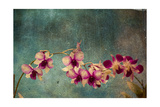 Hawaiian Orchid Prints by  pdb1