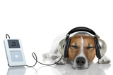 Dog Listen to Music with a Music Player Fotografisk tryk af Javier Brosch