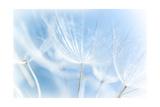 Abstract Dandelion Background Art by Anna Omelchenko