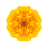 Yellow Concentric Marigold Mandala Flower Print by  tr3gi