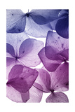 Colorful Flower Petal Closeup Art by  maaram