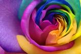 Close Up of Rainbow Rose Heart Fotografie-Druck von  fullempty
