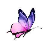 Color Butterfly Flying Premium Giclee Print by  suns_luck
