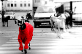 Goat in the Red Sweater Photographic Print by  Sashka_Lenka