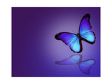 Morpho Blue Butterfly on Dark Blue Background Plakater af suns_luck