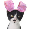 Funny Black and White Kitten Wearing Pink Easter Bunny Ears Posters by  Hannamariah