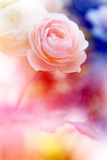 Beautiful Flowers Made with Color Filters and Textures Photographic Print by Timofeeva Maria