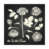 The Wild Roses - Hand Drawn Illustrations - Chalkboard Premium Giclee Print by  ONiONAstudio