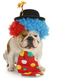 Dog Clown Photographic Print by Willee Cole