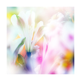 Beautiful Flowers Made with Color Filters Poster by Timofeeva Maria