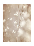 Cherry Tree Blossom, Abstract Soft Color Floral Background Posters av Anna Omelchenko