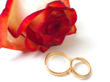 Rose and Two Wedding Rings Photographic Print by  Serp