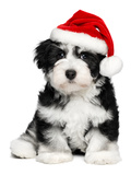 Cute Christmas Havanese Puppy Dog with a Santa Hat Photographic Print by  mdorottya