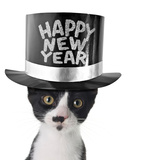 Funny Kitten Wearing a Happy New Year Hat Photo by  Hannamariah