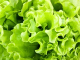 Fresh Green Lettuce Salad Photographic Print by  valeev