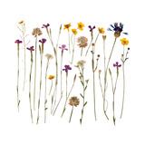 Pressed Wild Flowers Posters by Iwona Grodzka