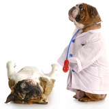 Veterinary Care Photographic Print by Willee Cole