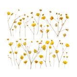 Pressed Yellow Wildflowers Posters by Iwona Grodzka