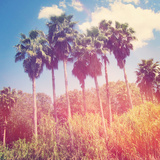 Palm Trees Photographic Print by  melking