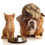 Bulldog and Cat at Food Dish Together Prints by Willee Cole