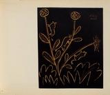 LC - Plante aux toritos Samlertryk af Pablo Picasso