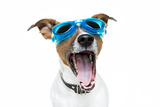 Dog with Blue Goggles Photographic Print by Javier Brosch