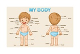 Parts of the Body Posters by  interactimages