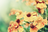Defocus Floral Background with Unreal Color Filters Print by  Katalinks