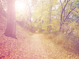 A Forest with the Sun Shining Through Print by  graphicphoto