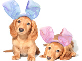 Easter Bunny Dachshunds Puppies Poster by  Hannamariah