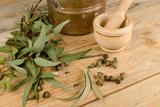 Medicinal Eucalyptus Photographic Print by  Hemeroskopion