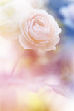 Beautiful Flowers Made with Color Filters and Textures Posters by Timofeeva Maria