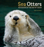 Sea Otters - 2015 Calendar Calendars