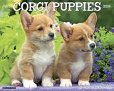 Corgi Puppies - 2015 Calendar Calendars