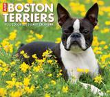 Just Boston Terriers - 2015 Box Calendar Calendars
