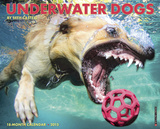 Underwater Dogs - 2015 Calendar Calendars