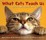 What Cats Teach Us - 2015 Box Calendar Calendars