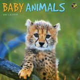 Baby Animals - 2015 Mini Calendar Calendarios